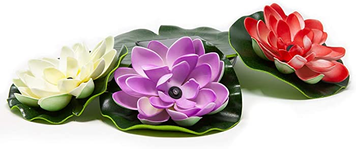 Updated 2021 – Top 10 Garden Lily Pond