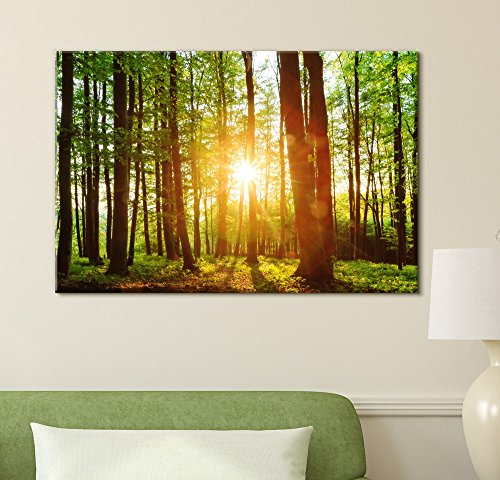 Sunrise Peeking Through a Green Rainforest Wall Decor ation