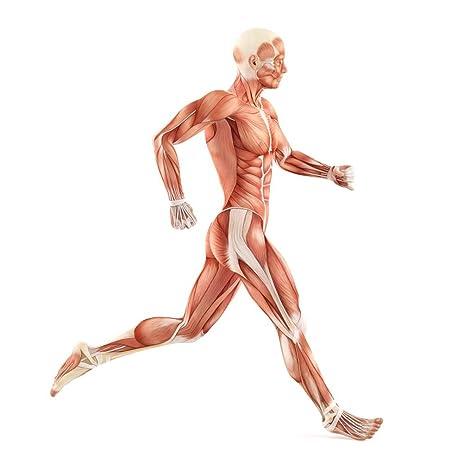 Amazon Wallmonkeys Running Man Muscles Anatomy System Peel And