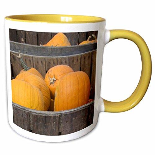 3dRose Danita Delimont - Farms - Massachusetts, Natick, Lookout Farm, pumpkins - US22 LEN0255 - Lisa S. Engelbrecht - 11oz Two-Tone Yellow Mug - Outlets Natick