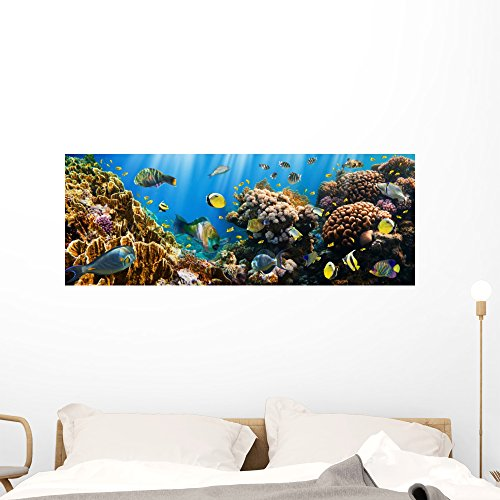 Coral Reef Murals - Wallmonkeys Coral Colony Reef Panoramic Wall Mural Decal Graphic (48 in W x 18 in H) WM399724