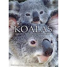 Koalas: Moving Portraits of Serenity
