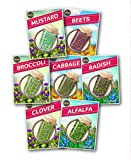 buy Zziggysgal – Organic Culinary Sprouting Seeds (Set of 7 Varieties) – Including Alfalfa, Brocolli, Radish, Cabbage, Clover, Beets and Mustard – Keeping Nutrition Fully Home Grown and Organic now, new 2018-2017 bestseller, review and Photo, best price $15.99
