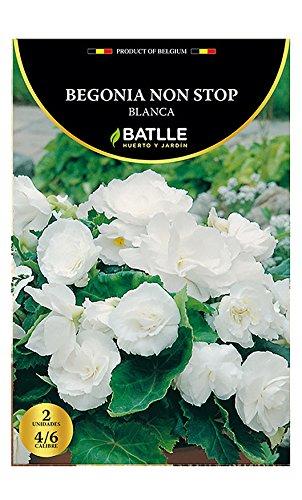 Bulbos - Begonia Non Stop blanca - Batlle Semillas Batlle 075703BOLS