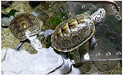 OPEN BUY Isla Flotante azotea con rampa Ajustable para Tortugas Acuario pecera Estanque terrario