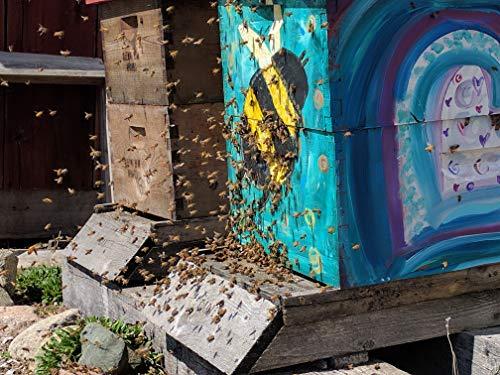 Tupelo Honey Bulk 5 Gallon Plastic Bucket - 60 lbs Premium Grade A Beekeepers Honey from Apalachicola River Basin by Sleeping Bear Farms (Image #1)