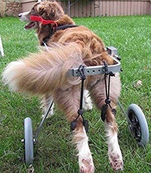 4.M size  Hip height16\ Adjustable Dog Pet Wheelchair, Hind Legs Rehabilitation, 7 Sizes (0-110lbs), Dog Cart,Wheels (4.M Size  Hip height16-20.5 , Width 7.9 -12.2 )
