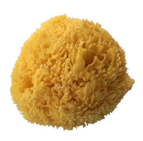 PanHy Natural Sea Sponge 5-6 Large Perfect For Bath, Shower and Body Care,Ultra Soft and not Skin Irritating, Originally Used for Babies but for Everyone (Bleached)
