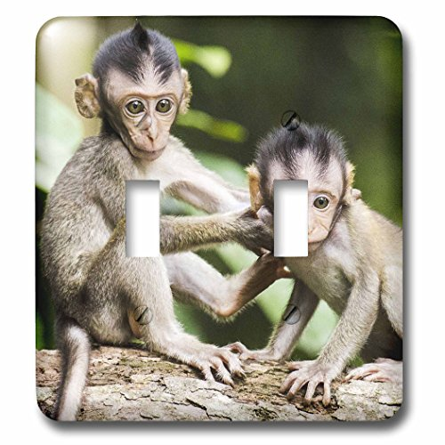 3D Rose lsp_233907_2 Funny Monkeys. Brothers. Wildlife. Safari. Africa. Double Toggle Switch