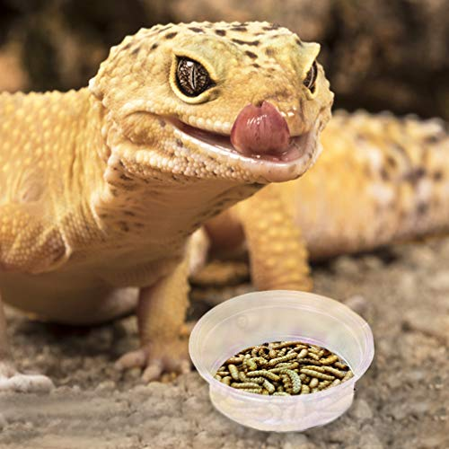 """SunGrow Gecko Food and Water Containers (100 pcs) - Transparent, Plastic 0.5 oz Capacity Dishes - Reusable, Recyclable and Disposable Cups - 1.6"""" Diameter and 0.6"""" Depth Fits Various Reptile Feeders"""