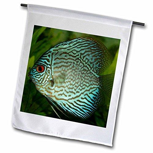 Sven Herkenrath Sealife - Blue Exotic Discus Fish - 18 x ...