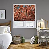 4 feet roman shades - Window Roller Shade, Sheer Fabric, Autumn Forest Theme (4' Width)