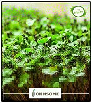 Amazon.com : Shopmeeko Seed Herb Seeds Home Depot - Pepper s Indoor on home depot organic gardening, home depot planting, home depot lavender, home depot weeds, home depot peonies, home depot chrysanthemums, home depot hostas, home depot fall, home depot wildlife, home depot sweet potato, home depot tobacco, home depot vegetables, home depot daffodils, home depot coffee, home depot green beans, home depot hot peppers, home depot rosemary, home depot lawn care, home depot drought, home depot recipes,