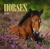 Horses 2016 Calendar