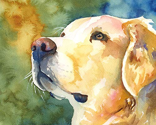 Golden Retriever Portrait Art Print from Original Watercolor Painting, Dog Gifts and Portraits by Ron Krajewski