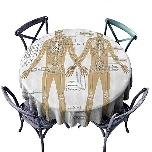 Human Anatomy Washable Tablecloth Diagram of Human Skeleton System with Titled Main Parts of Body Joints Picture Table Cover for Kitchen (Round, 60 Inch, White -