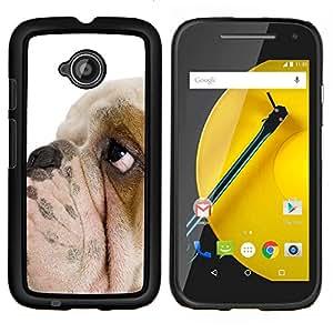 EJOOY---Cubierta de la caja de protección para la piel dura ** Motorola Moto E2 E2nd Gen ** --Raza Inglés British Bulldog Puppy Dog