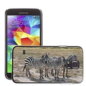 Etui Housse Coque de Protection Cover Rigide pour // M00129756 Zebra Afria Kenia Safari Cebras // Samsung Galaxy S5 S V SV i9600 (Not Fits S5 ACTIVE)