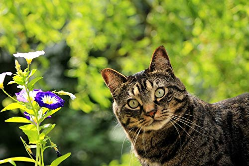 - Home Comforts Canvas Print Kitty Pet Nature Feline Spring Flower Cat Vivid Imagery Stretched Canvas 32 x 24