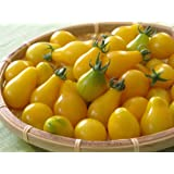 Yellow Pear Tomato 4 Plants - Perfectly Shaped