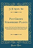 Amazon / Forgotten Books: Pot - Grown Strawberry Plants Summer, 1918 The Van Fleet Hybrid Strawberries, the Best Everbearing Strawberries, Other Choice Varieties of . Trees and Liberty Iris Classic Reprint (J T Lovett Inc)