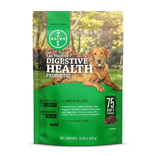Bayer Lactoquil Soft Chews Digestive Health Probiotic Supplement for Dogs, 75 Count (Best Probiotic For Dogs After Antibiotics)
