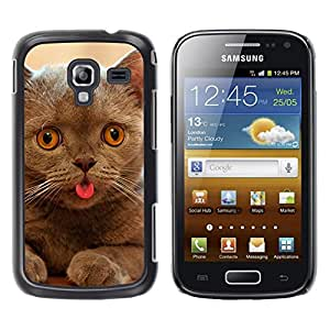 Vortex Accessory Hard Protective Case Skin Cover For Samsung Galaxy Ace 2 / I8160 - Cat Kitten Chartreux British Shorthair