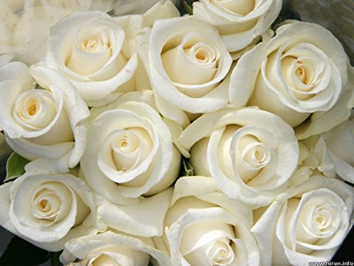 Review 100 Fresh White Roses