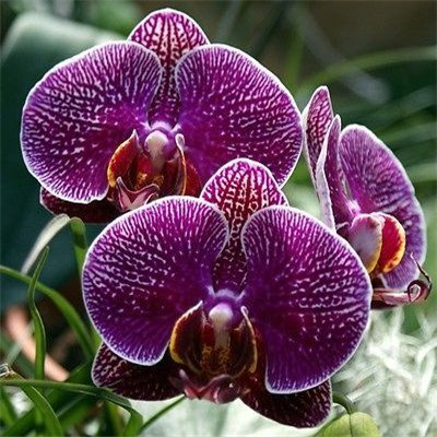 free ship ``Hot `40seeds Diffenent Mixed Butterfly orchid Bonsai flowers orchid seed POT FLOWER PLANT GARDEN DIY HOME (Ship Orchids Free)