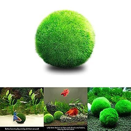 Tianu Adorno para acuario con forma de bola de musgo para pecera, camarones y caracoles de bajo mantenimiento, crecimiento de algas, respetuoso con el medio ...