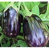 Black Beauty Egg Plant Seeds, 100+ Premium Heirloom Seeds, ON SALE!, (Isla's Garden Seeds), Non Gmo Organic, 90% Germination