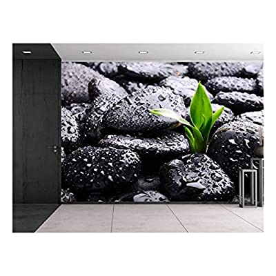 Premium Product, Incredible Artisanship, Rain Drops Over Black Rocks and a Little Green Plant Wall Mural
