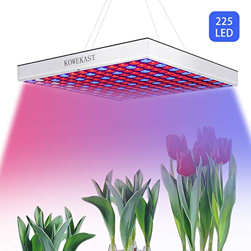 Blue And Red Led Lights For Growing