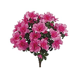 "17.5"" Azalea Bush x9 Cerise (pack of 6) 33"