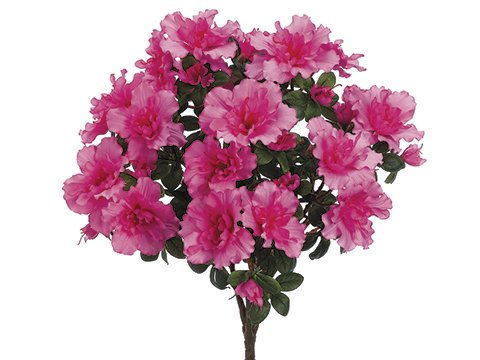 175-Azalea-Bush-x9-Cerise-pack-of-6