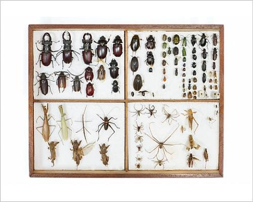 Photographic Print of Insects Collection Galicia, Spain