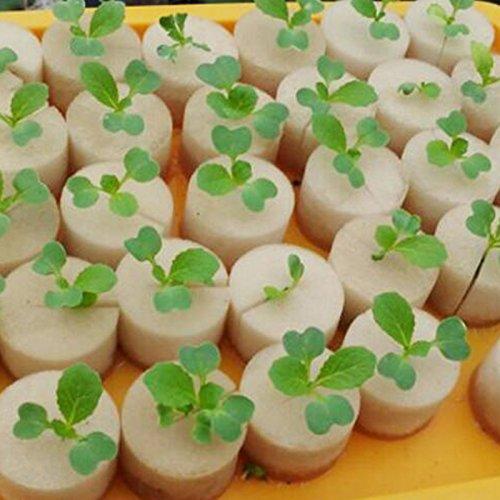 CARESHINE 100Pcs 1.75'' Inch Sponge Root Cloning Collar Inserts Garden Sponges