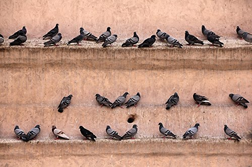 Home Comforts Acrylic Face Mounted Prints Pigeons Castle Fortress Bird Lines Wall Gathered Print 20 x 16. Worry Free Wall Installation - Shadow Mount is Included.