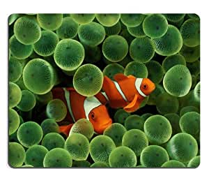 Clownfish Fish Anemone Sea Life Tropical Mouse Pads Customized Made to Order Support Ready 9 7/8 Inch (250mm) X 7 7/8 Inch (200mm) X 1/16 Inch (2mm) High Quality Eco Friendly Cloth with Neoprene Rubber Luxlady Mouse Pad Desktop Mousepad Laptop Mousepads Comfortable Computer Mouse Mat Cute Gaming Mouse pad