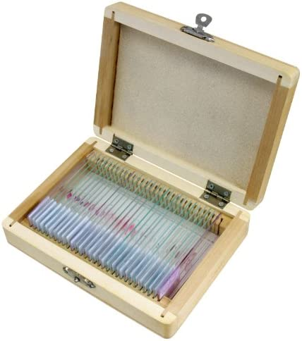 Bresser 5985000 Dauerpräparate Histologie (30x)