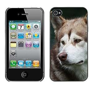 Vortex Accessory Carcasa Protectora Para APPLE iPHONE 4 / 4S - Alaskan Malamute Husky Sad Muzzle -