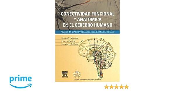 Conectividad Funcional Y Anatómica En El Cerebro Humano + ...