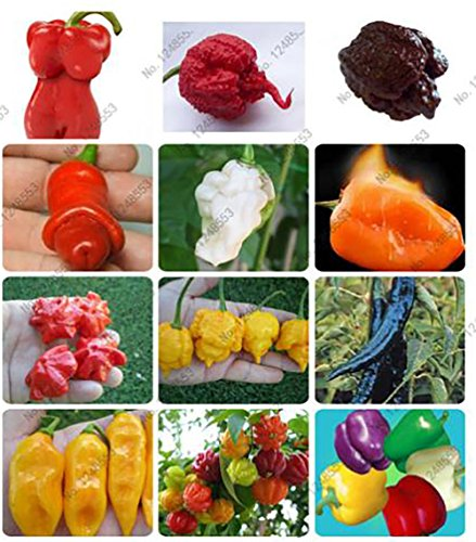 The Best Seller 200 Mixed seeds vegetable fruit pepper seeds, Giant chili seeds + sweet pepper + Carolina Reaper