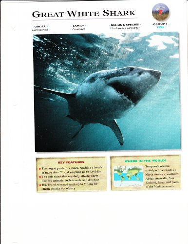 Wildlife Explorer CARD Animals Educational Facts Fish Great White Shark Group 4 Card 7 (Wildlife Explorer Animal Cards)