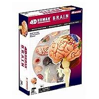 TEDCO 4D Anatomy Brain Model