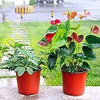 Decoración de adornos para el hogar del jardín 100 Unids Plantas De Plástico Vivero Olla / Macetas Plantas De Semillas Flor Planta Contenedor Semillas De Arranque Jardín al aire libre Patio y