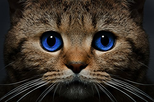 Tomorrow sunny F044 Cat Snout blue eyes view mustache Animal