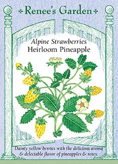 Alpine Strawberries 'Heirloom Pineapple'