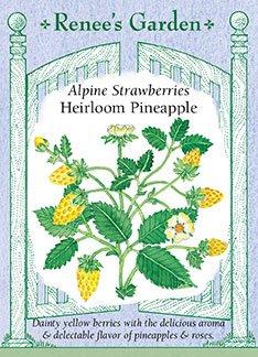 Alpine Strawberry - Alpine Strawberries 'Heirloom Pineapple'