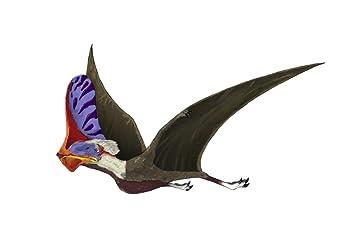 TapejaraAGenusOfBrazilianPterosaurFromTheCretaceousPeriodPosterPrint